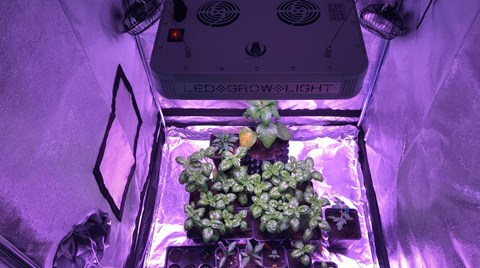 Understanding the effect of intense light (PPFD) is essential for successful growth. Whether you have a full grow tent with LED lights or a...