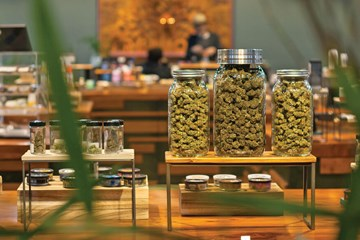 Cannabis One: Navigating a New Industry