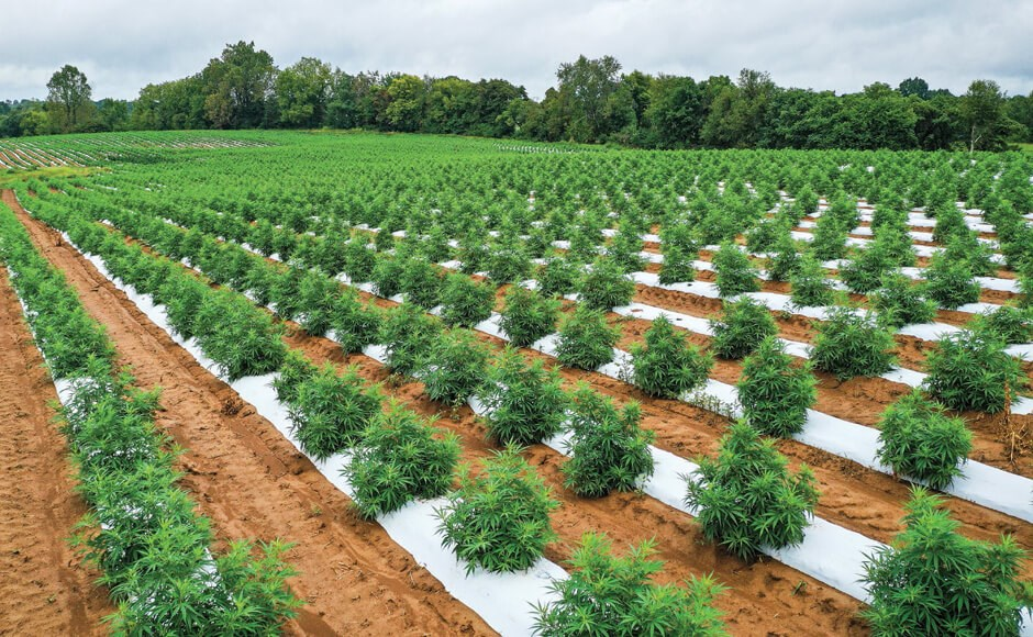 The Challenge of Growing Environmentally Responsible Cannabis