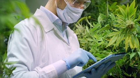 We caught up with urban-gro's Colin Ferrian to discuss how his company's gro-care platform is helping cannabis firms through these...