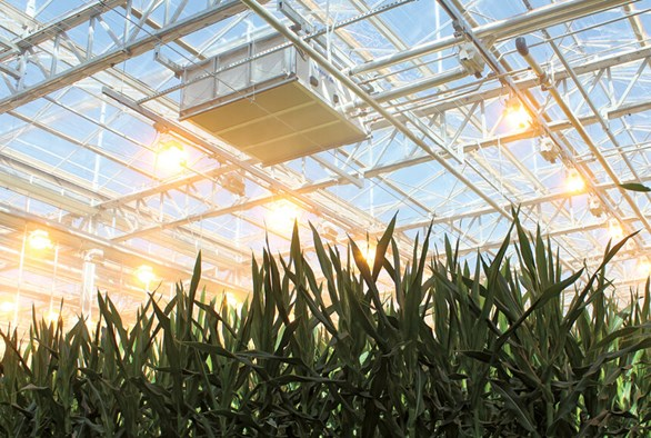 Bayer Cropscience: A New Desert Bloom