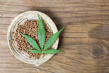 How to Grow Your Own Cannabis Plants From Seeds