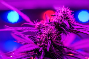 How To Set Up Your LED Grow Light