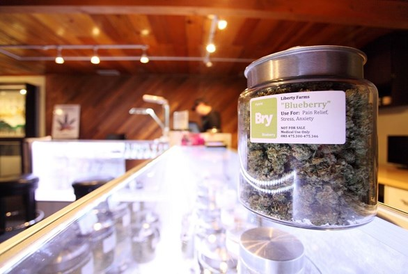 Seeking a Milder Dose: More Medical Marijuana Patients are Opting to Grow Their Own