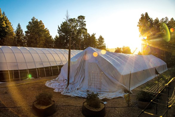 How to Cool a Light Deprivation Greenhouse