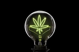 Try This Highly Recommended Cannabis Lighting Schedule