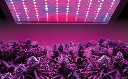 Growing Cans Why Led Grow Lights Are The Way To Go