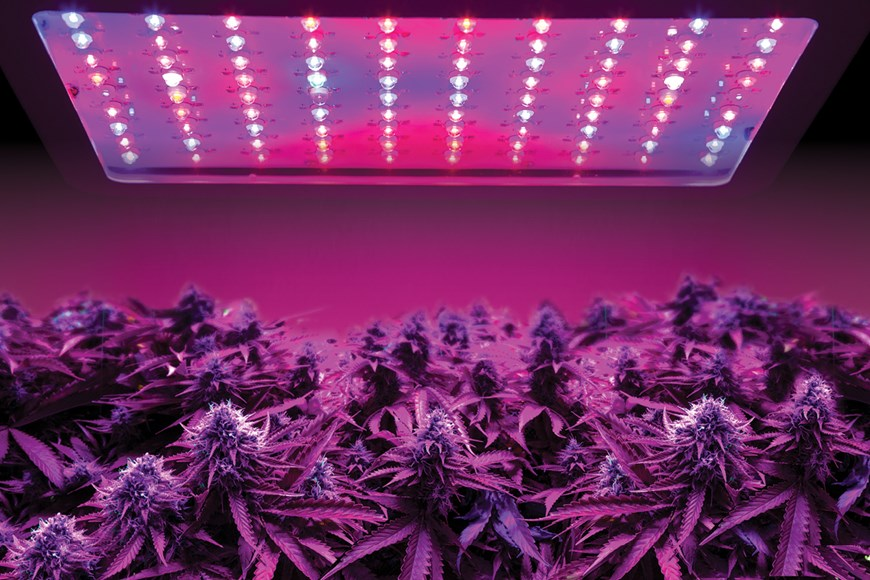 Easy Ways to Increase the Amount of Light Energy Reaching Your Plants