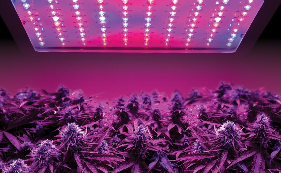 Growing Cannabis? Why LED Grow Lights Are the Way to Go