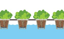 The 6 Most Common Types of Hydroponic Systems Found in Modern Grow Rooms