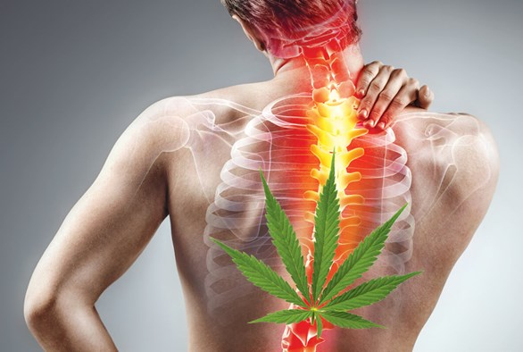 The Right Strains for Back Pain