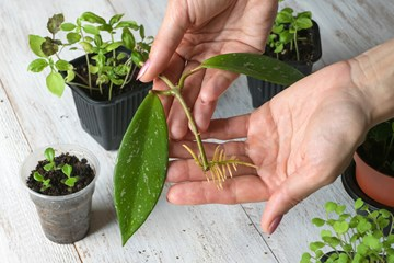 A Simple Guide to Taking Plant Cuttings