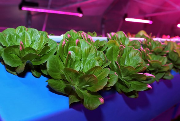 Advanced Aeroponics: A Comprehensive Guide