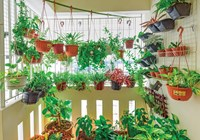 5 Ways to Grow Veggies in Your Apartment or Tiny House