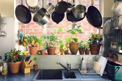 Garden Everywhere! Creative Spaces for Your Next Indoor Garden