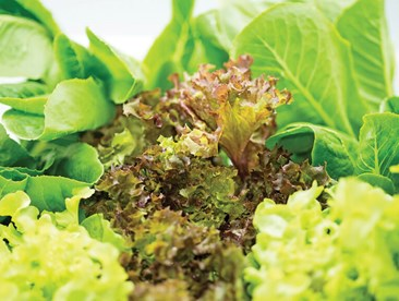 What is the ideal humidity level for leafy greens?