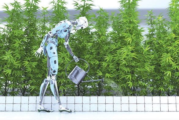 The Latest Automation Options for Cannabis Cultivation