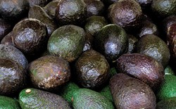A Brief History of Avocados