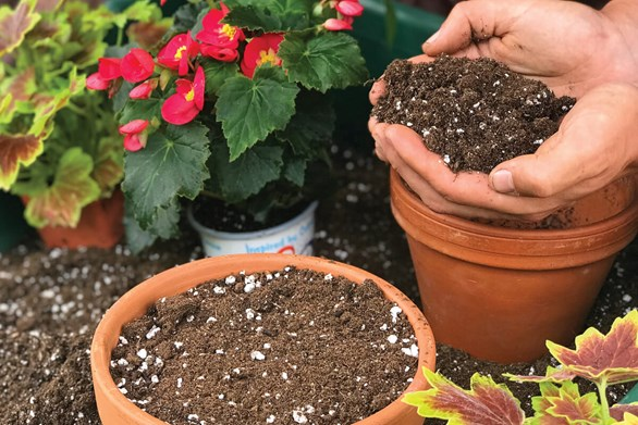 Choosing the Right Soil For Your Garden