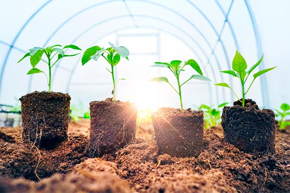 How to Improve Plant Growth with Micro-organisms