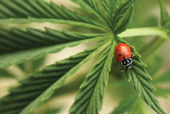 Beginner's Guide to Beneficial Insects