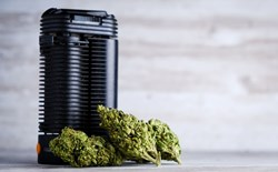 Cannabis dry herb vaporizer with dried buds.