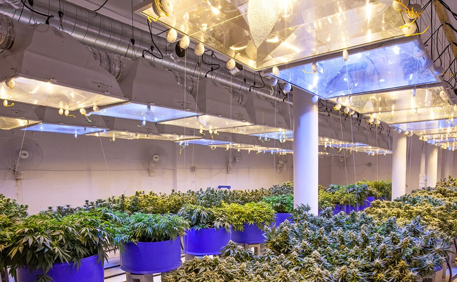 Ceramic Metal Halide lights in a commercial a grow