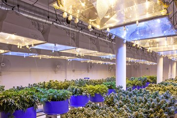 Your Guide to Ceramic Metal Halide Grow Lights