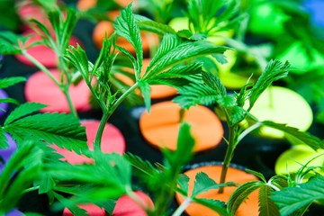 The Benefits of Adding CO2 During the Cloning Stage