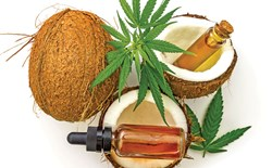 Coconuts surrounded by cannabis leaves