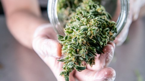 How you handle your post-harvest cannabis is personal, though there are right ways and wrong ways to each method.
