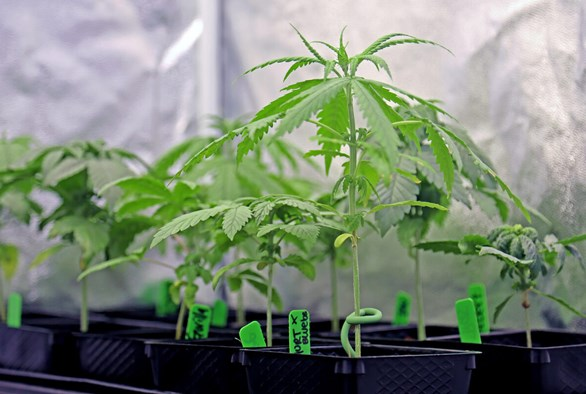 9 Grow Tent Accessories to Maximize Your Cannabis Yields