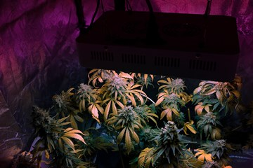 10 Myths About LED Grow Lights You Should Stop Believing