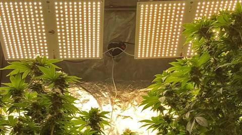 Planning the light setup for a grow space by using established watts per square foot recommendations is a quick and easy way to estimate...