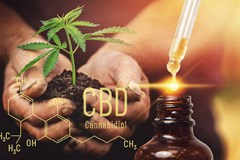 Image of hands holding a small cannabis plant next to a bottle of CBD oil.