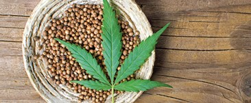 10 Markers of a Quality Marijuana Seed