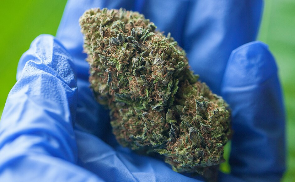 Cannabis Microbial Remediation: The Best Way To Ensure Safety