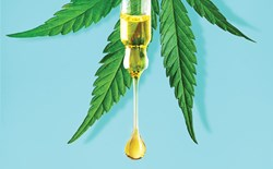 What it's Oil About: Understanding Hemp, CBD, and Cannabis Oils