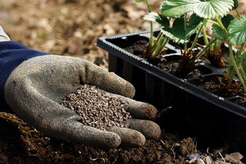 Secret Weapons for Your Garden: Humic and Fulvic Acids