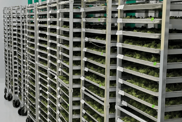 A New Way to Cure Bud