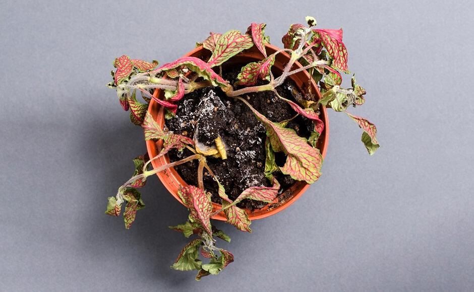 Revive Your Dying Plants In 5 Easy Steps