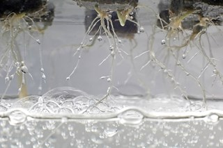 Can I use electrolysis for nutrient solution in a hydroponic system for increasing the dissolved oxygen levels?