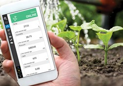 Gardener using an app to check temperature and humidity levels in an outdoor garden.
