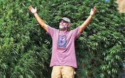 Lawrence Ringo, The Father of CBD