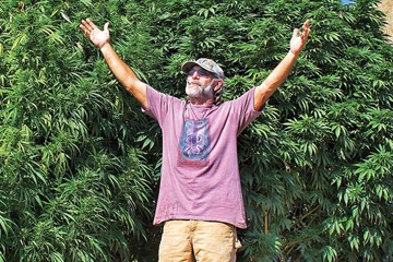 Lawrence Ringo: The Father of CBD