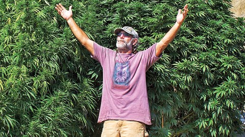 The man behind the famous Charlotte's Web strain is Lawrence Ringo, who introduced the world to high-CBD cannabis strains.