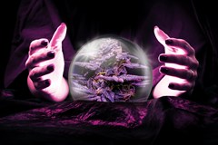 Psychic peering into a crystal ball and seeing a cannabis plant.