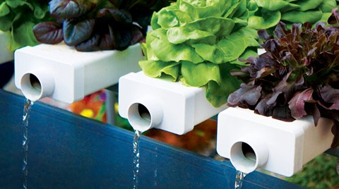 Whether or not to flush is not the question. This is as true for your personal bathroom habits as it is for your hydroponic system —...