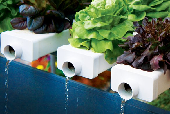 Flushing Your Hydroponic System: Water vs. Agents