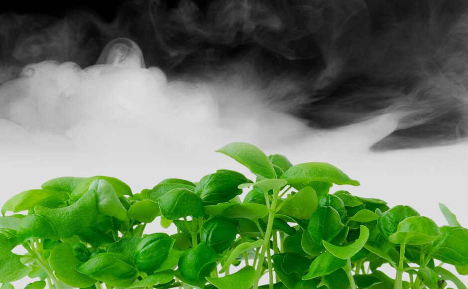 Microgreens surrounded by fog